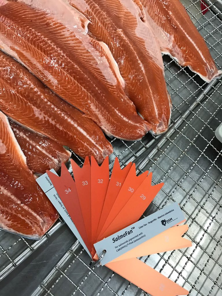 Salmon – KARA INTERNATIONAL