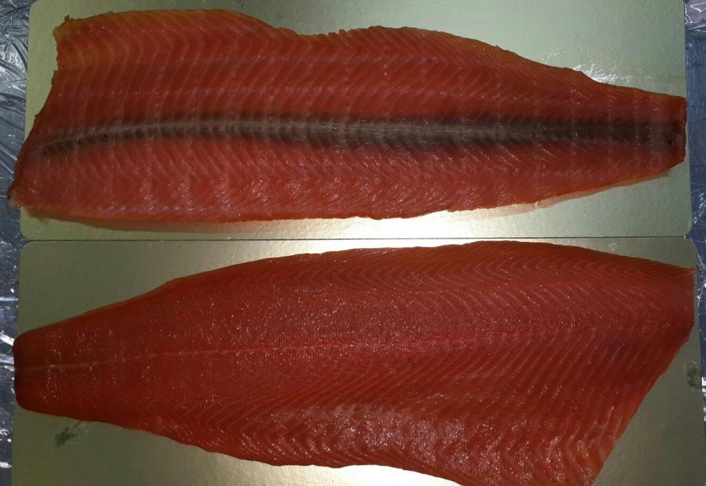Salmon 37